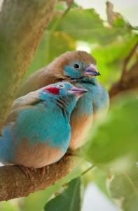 Подозреваю, что такие птички очень даже могут обитать в Новой Гвинее)