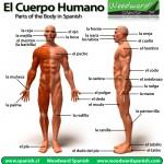 Названия частей тела на испанском и идиомы с ними