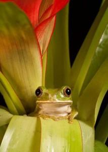 Жаба по-английски toad