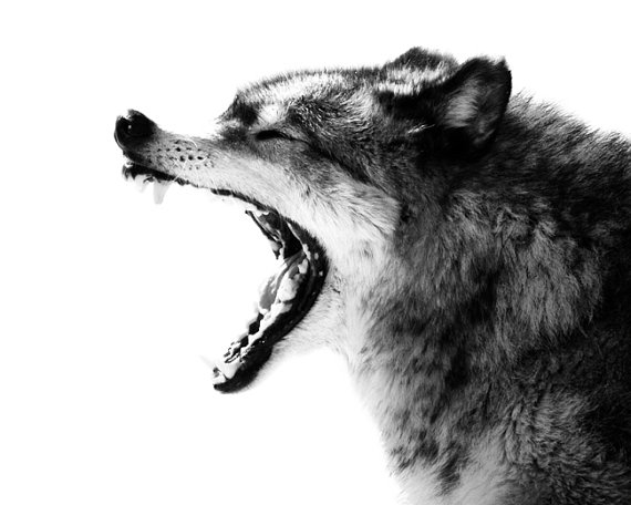 """С волками жить по волчьи выть"""" на"""