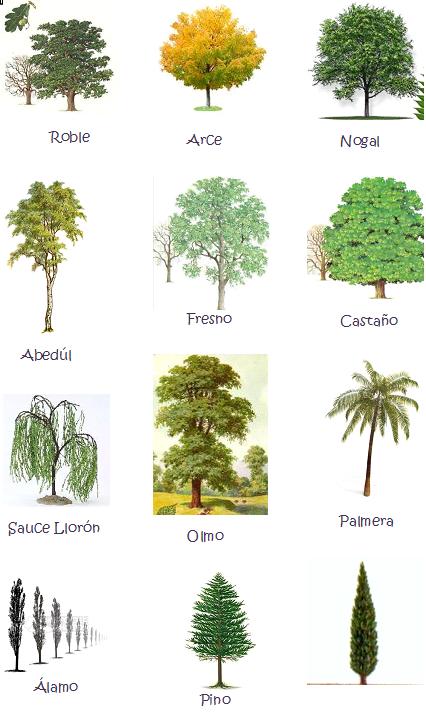 tipos de árbol