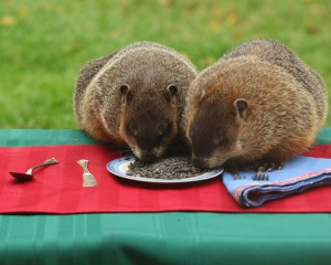 A groundhogs´ picnic by Alec Hartman