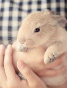 Кролик ни при чем, просто очаровательный)