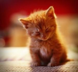 Кот ни при чем, просто милый)