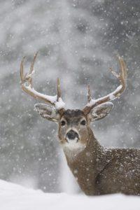 Картинка не в тему поста. Просто зима на носу...