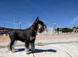Наша любимая собака - Пеппа!